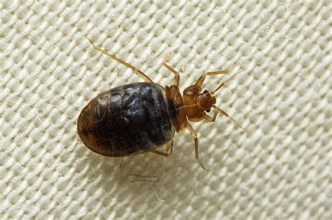 bed bug registry pa these household pests really freak us out but which one
