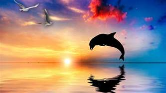 Free dolphin backgrounds hd images dolphin download photos dolphin