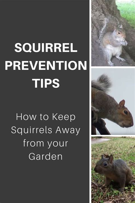 squirrel prevention tips how to keep squirrels away from