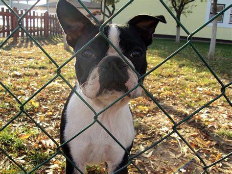 recinto per cani da interno recinto per cani da interno e da esterno dogalize