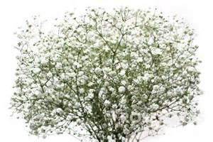 Fillers For Glass Vases 50 Fabulous Baby S Breath Bouquet Flowers Golfian Com