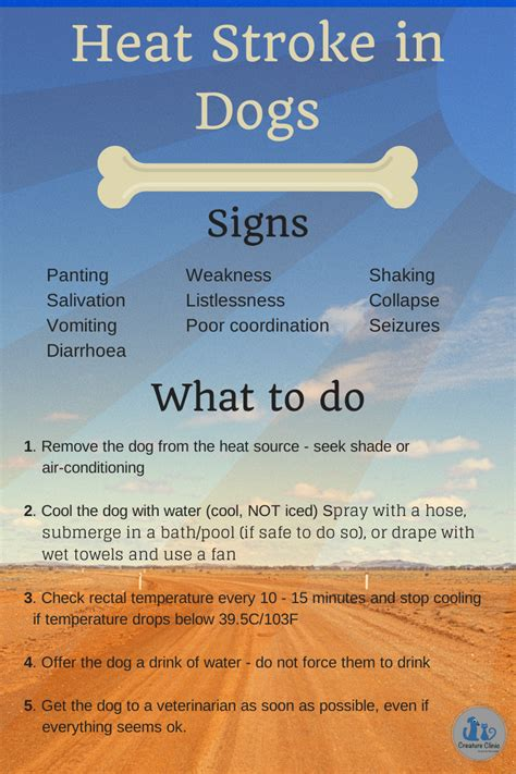 heat stroke in dogs heat stroke in pets