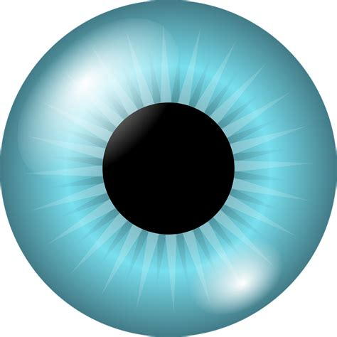 bola mata bunga iris murid gambar vektor gratis  pixabay