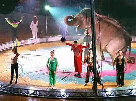 Garden Brothers Circus by Circus Comes To The Danbury Arena For Weekend Shows