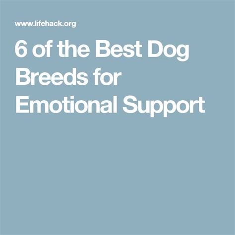 best emotional support dogs best 25 emotional support animal ideas on