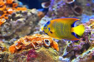 colorful tropical fish colorful tropical fish flickr photo