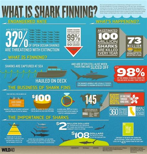 105 best images about sharks are cool on swim