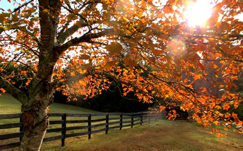 fall trees trees and fall on tree care fall growing a greener world 174