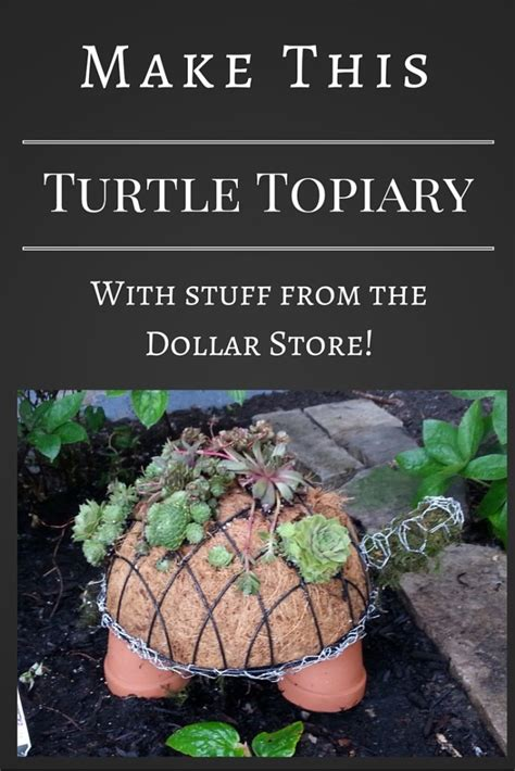 how to make a succulent turtle how to make a succulent turtle topiary gardening in the