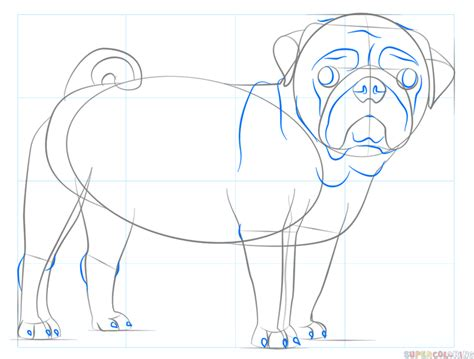 step by step how to draw a pug how to draw a pug step by step 28 images how to draw a pug step by step pets