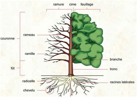 define tree l arbre