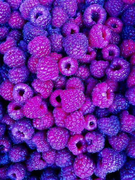 b berry purple purple berries purpalicious