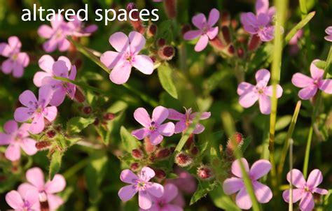 pink flowers names and picture 30 cool hd wallpaper