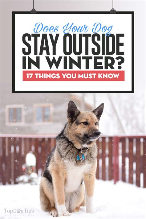 puppy to outside 17 things to remember when keeping dogs outside in winter couture country