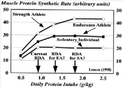 g kg carbohydrates per day the myth of 1 g lb optimal protein intake for bodybuilders