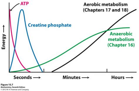 creatine phosphate creatine phosphate system taekwondo and energy systems