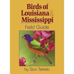 southern birds backyard guide 1000 images about things to do in our backyard on
