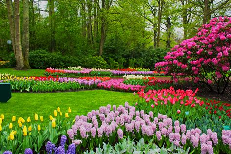 Spring Flowers Scenery Hd Wallpapers Free Download Flower Garden Scenery
