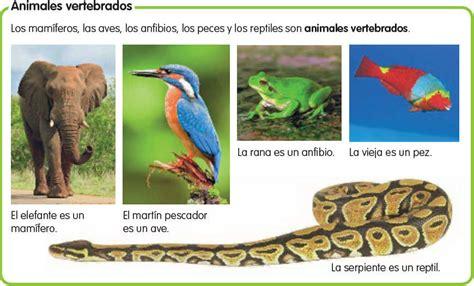 imagenes de animales vertebrados aves im 225 genes de animales vertebrados para imprimir educanimando
