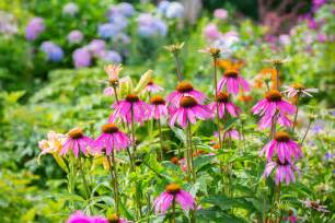 Perennial Garden Flowers Easiest Perennials To Grow How To An Easy Garden The Farmer S Almanac