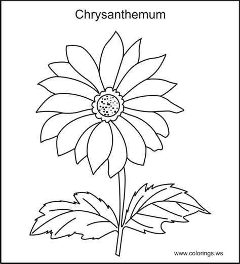 flowering herb chrysanthemum flower colouring pages picolour