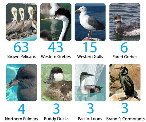 international bird rescue every bird matters 187 bird counts