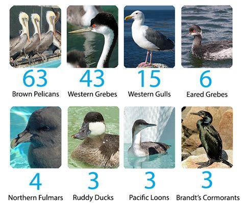 international bird rescue every bird matters 187 bird counts