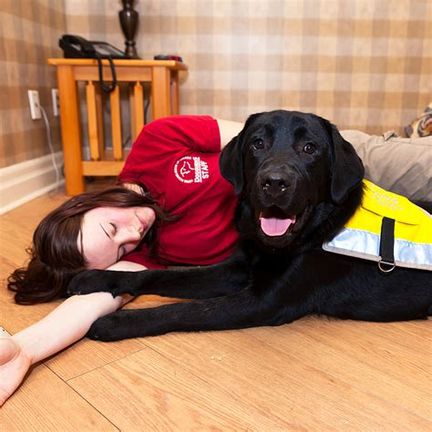 seizure dogs service dogs bring diverse help to those with disabilities