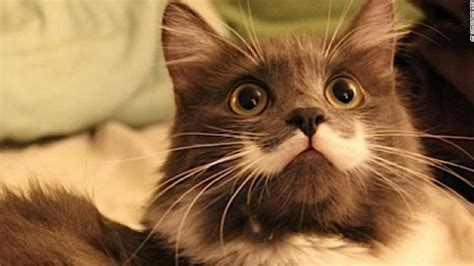 Show Me Your Cat Eye 5 by 5 Ways To Celebrate National Cat Day Cnn
