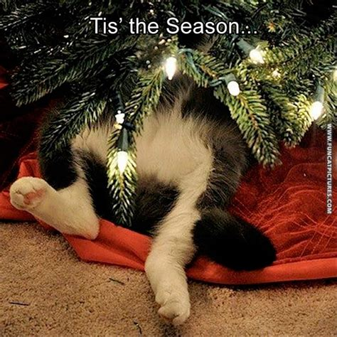 funny cats in christmas trees archives cat pictures