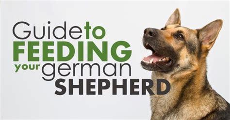 german shepherd puppy feeding german shepherd feeding guide german shepherd things for my german shepherds