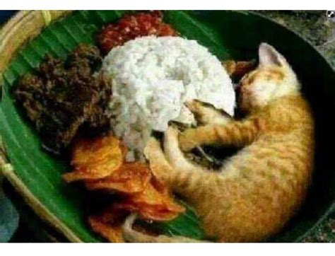 nasi kucing lucu pinterest humor