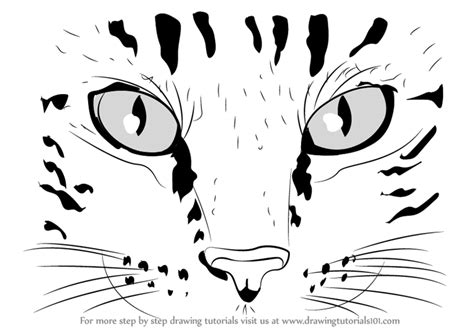 how to draw doodle cat learn how to draw cat cats step by step drawing
