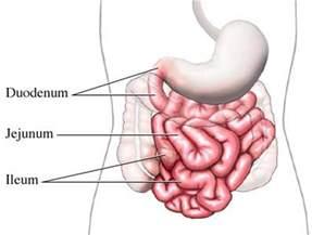 small intestine causes symptoms treatment small intestine
