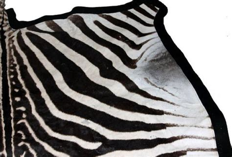 Real Zebra Rug by Large Authentic Zebra Skin Rug Omero Home