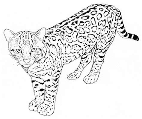 Leopard Coloring Page Animals Town Animals Color Sheet Free Snow Leopard Coloring Pages To Print
