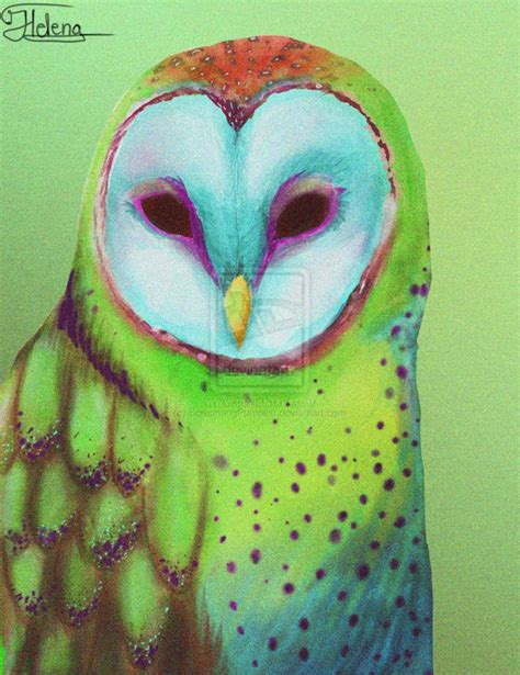 Colorfull Owl colorful owl images