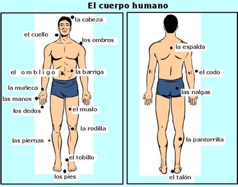 el cuerpo humano el cuerpo humano descripcion fisica