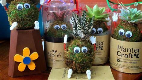 lumut madu media usaha dagang 01 planter craft bisnis boneka lumut yang menguntungkan