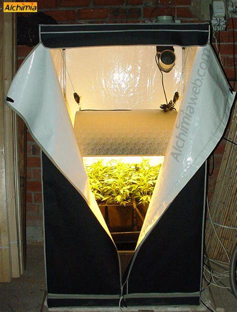 culture interieur de cannabis du growshop alchimia