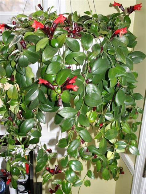 picture of best vertical garden plants with care tips 5