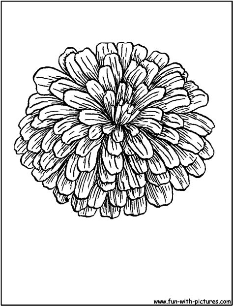 coloring sheet of zinnias | Zinnia Coloring Page