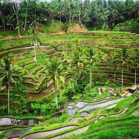 Dewi Sri 21 best images about dewi sri on balinese