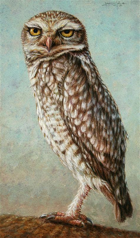 burrowing owl printable pictures burrowing owl by james w johnson