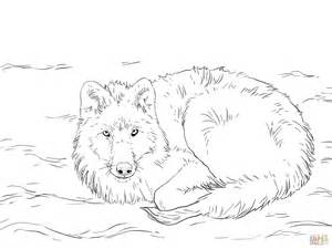 arctic wolf coloring coloring pages