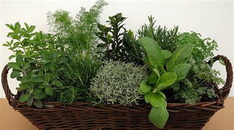 vasi per piante aromatiche piante aromatiche come curarle in inverno lezioni di