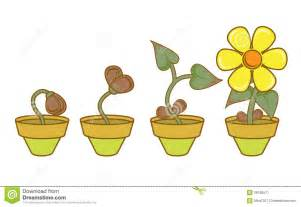 Lotus Flower Growth Cycle Sep 27 2011 183 Lotus Flower Growth Flower Growth Cycle