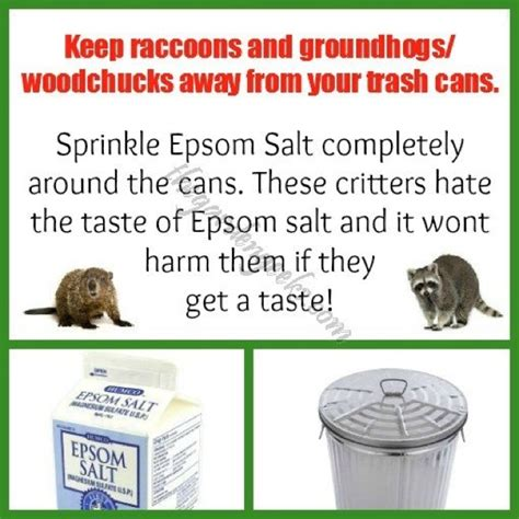 how to use stop gossip oil 17 best images about diy natural insect control on