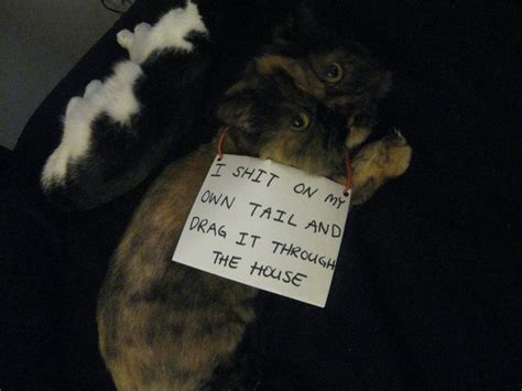 3 reasons you should not get a vixen sew in 27 reasons why you should not get a cat