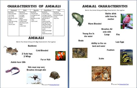 new year animal characteristics printable animals and their characteristics free worksheet